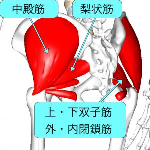 仙腸関節周囲筋 L1解説付