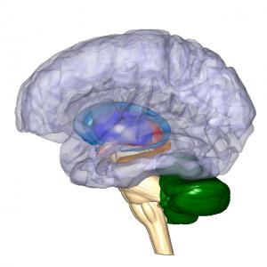 基底核・視床・小脳 L5