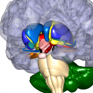 大脳基底核関連 L10
