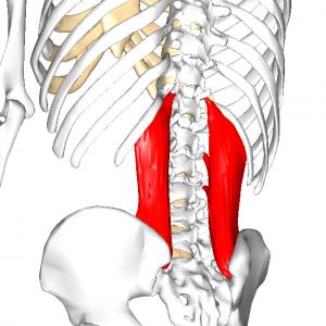 腰方形筋 L1