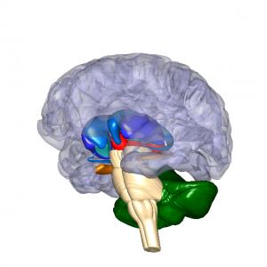 基底核・視床・小脳 L1