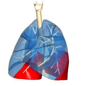 下側肺底区L5