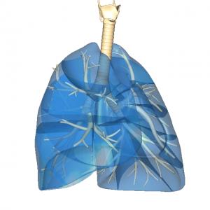 肺 右 前 L1