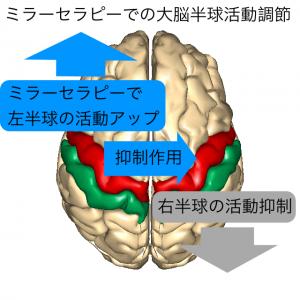 大脳半球活動調節1
