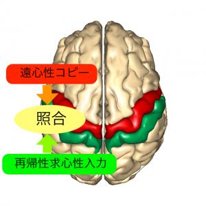運動感覚照合1